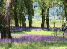 [의성]전통 마을숲, 명품 마을숲으로 태어나다!