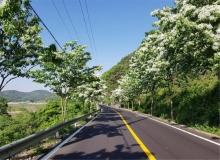 [의성]나무 심어 미세먼지 저감... 의성군, 국도 28호선 가로수 식재