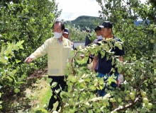 [의성]사과 탄저병 긴급방제 지원으로 진압 나서